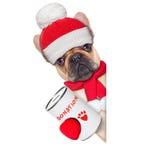 Donation dog stock photo