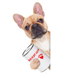 Donation dog. French bulldog dog with a donation can , collecting money for charity, isolated on white background royalty free stock images