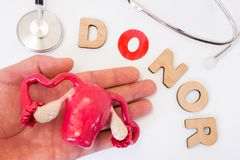 Donation of uterus with ovaries or womb for rent in donor hand concept photo. Word donor with letter O as symbol of that donation. Near stethoscope and uterus stock photo