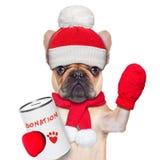 Donationhund Royaltyfri Bild