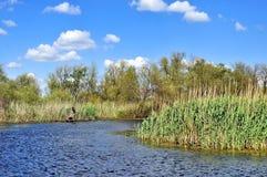 Donau-Delta lizenzfreie stockfotos
