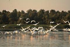 Donau-Dreieck Lizenzfreie Stockfotos