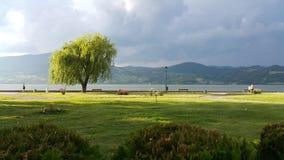 Donau-Küste bei Gornji Milanovac stockfotos