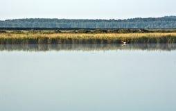 Donau-Landschaft mit einem Vogel auf dem Wasser Stockfotografie