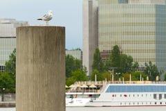 Donau Wien lizenzfreies stockbild