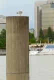Donau Wien lizenzfreie stockbilder