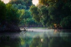 Donaudelta, Tulcea, Rumänien Arkivbilder