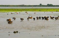 Donaudeltafåglar Arkivfoton