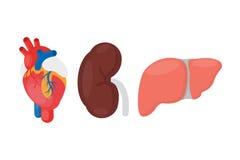 Donazione di organo interno illustrazione di stock