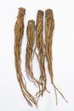 Dong Quai (Angelica sinensis), also known as Dang Gui Ginseng Stock Photos