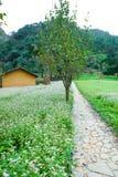 DONG VAN, HA GIANG, VIETNAM, le 20 octobre 2018 : Colline des fleurs Ha Giang, Vietnam de sarrasin Hagiang est une province la pl photo libre de droits