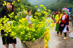 DONG VAN, HA GIANG, VIETNAM, November 14th, 2017: Unidentified ethnic minority kids with baskets of rapeseed flower in Hagiang Stock Photo