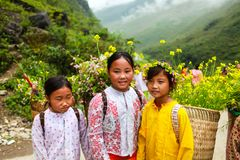 DONG VAN, HA GIANG, VIETNAM, November 14th, 2017: Unidentified ethnic minority kids with baskets of rapeseed flower in Hagiang Royalty Free Stock Images