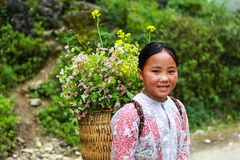 DONG VAN, HA GIANG, VIETNAM, November 14th, 2017: Unidentified ethnic minority kids with baskets of rapeseed flower in Hagiang Stock Photography