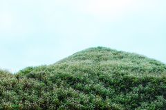 VAN, HA GIANG, VIETNAM, October 27th, 2018: Hill of buckwheat flowers Ha Giang, Vietnam. Hagiang is a northernmost province royalty free stock images