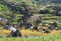 Dong Van Kras plateau geo globalny park Obrazy Royalty Free