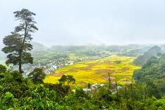 Van Miasteczko strona jest żniwem ryżowi pola Obrazy Royalty Free