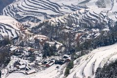 Dongchuan Red Land fight Macan Stock Photography