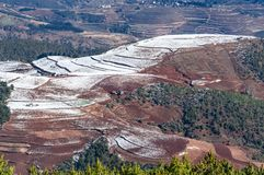 Dongchuan Red Land fight Macan Stock Image