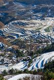 Dongchuan Red Land fight Macan Royalty Free Stock Photo