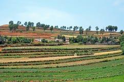 Dongchuan Red Land Stock Images