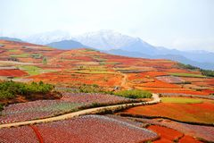 The Dazzling Dongchuan Red Soil Scenic Area. Dongchuan Red Soil Scenic Area is located in a warm and humid environment. Iron in the soil is slowly deposited by stock photo