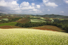 Dongchuan, Yunnan Red Land canola flower Royalty Free Stock Photography