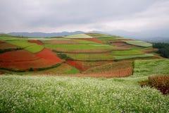 Dongchuan, Yunnan Red Land Stock Image