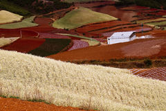 Dongchuan, Yunnan red land Royalty Free Stock Image