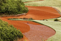 Dongchuan, Yunnan red land Royalty Free Stock Images