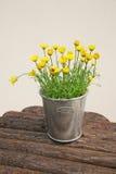 doniczce kwiaty Obraz Stock
