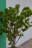Doniczkowa roślina w Meksyk zdjęcia stock