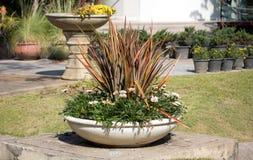 Doniczkowa roślina w ogródzie Fotografia Royalty Free