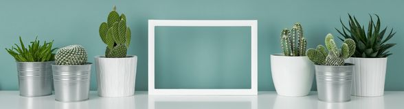 Doniczkowe domowe rośliny na białej półce przeciw turkus barwiącemu ściany i obrazek ramy egzaminowi próbnemu w górę sztandaru obraz royalty free
