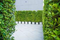 Doniczkowe rośliny dla budować teren fotografia stock