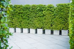 Doniczkowe rośliny dla budować teren zdjęcia royalty free