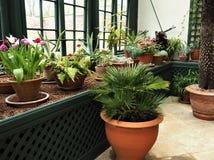 Doniczkowe rośliny r w konserwatorium z okno zdjęcia stock