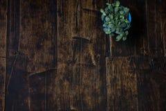 Doniczkowe rośliny umieszczać na drewnianych deskach stary Brown Zdjęcie Stock