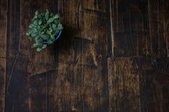 Doniczkowe rośliny umieszczać na drewnianych deskach stary Brown Zdjęcie Royalty Free
