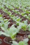 Doniczkowe rośliny w rzędach Zdjęcia Royalty Free