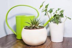 Doniczkowe rośliny na drewnianej powierzchni Obrazy Royalty Free
