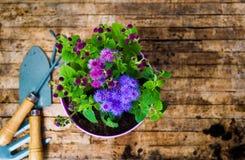 Doniczkowi kwiatu i ogrodnictwa narzędzia Zdjęcia Stock