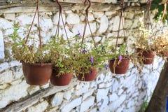 Doniczkowi kwiaty na ścianie w ulicie sirince wioska w Izmir fotografia stock