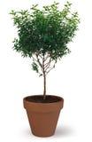 doniczkowy drzewo Obraz Royalty Free