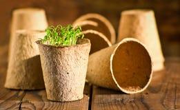 Doniczkowy sadzonkowy dorośnięcie w biodegradable torfowiskowym mech puszkuje zdjęcie stock