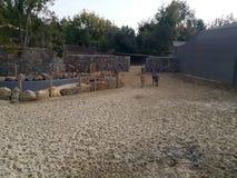 Donkeis no jardim zoológico de Faruk Yalcin em Istambul imagens de stock