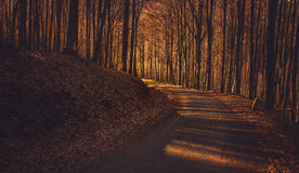 Donker Autumn Forest Road Royalty-vrije Stock Fotografie