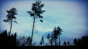 Donker bos stock afbeeldingen