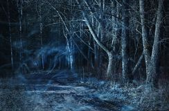 donker bos - aard en milieuconcept stock fotografie