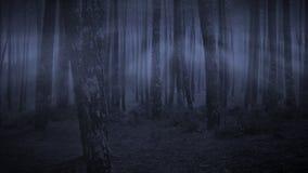 Donker bos bij nacht Royalty-vrije Stock Foto